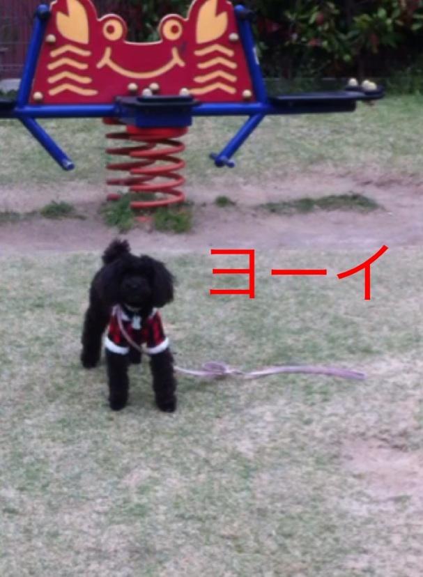 moblog_3fae38d1.jpg