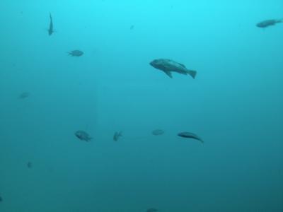 勝浦(魚)