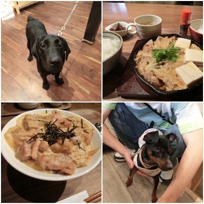 夜ご飯と看板犬