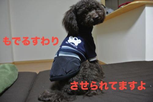 DSC_0860_convert_20121022213903.jpg