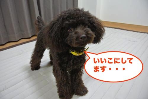 DSC_1200_convert_20121031201818.jpg