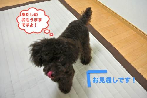 DSC_1430_convert_20121107211052.jpg