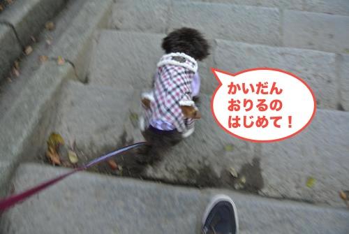 DSC_1527_convert_20121110192731.jpg