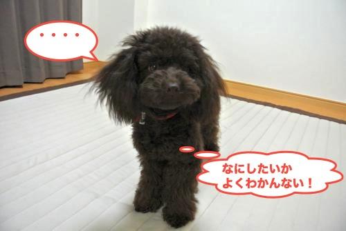 DSC_2327_convert_20121213215159.jpg