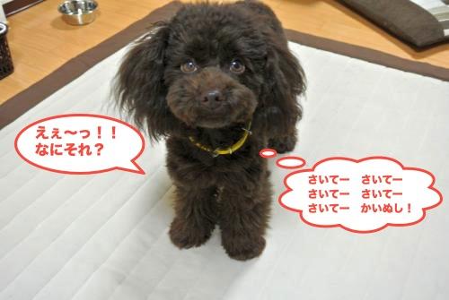 DSC_2419_convert_20121218193926.jpg