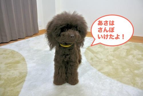 DSC_3773_01.jpg