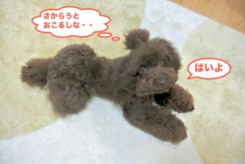 DSC_3911_01.jpg