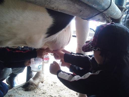 牛さん乳絞られるぅ~