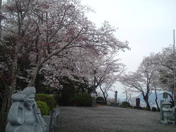 お大師さんの桜