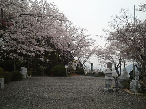 青空だったらよかったのにぃ の桜①