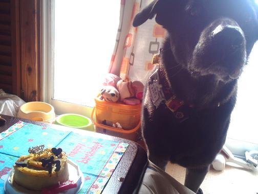 ケーキ~♪はやくっ