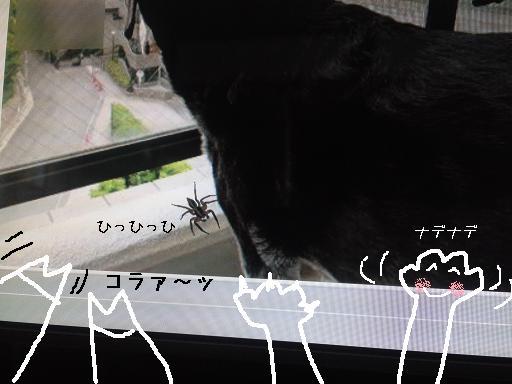 ソフィーちゃん あぶなーい!!