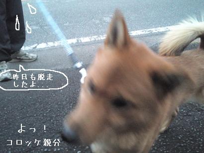 daasou-ken03.jpg