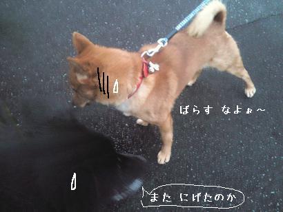 daasou-ken04.jpg