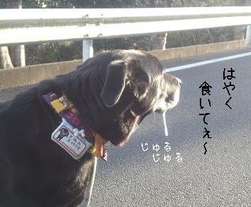 oyoda.jpg