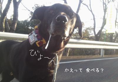 oyoda02.jpg