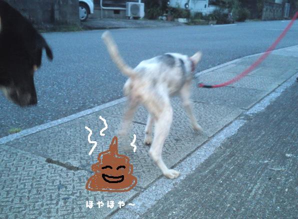 pookechan02.jpg