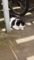 cat_0918.jpg