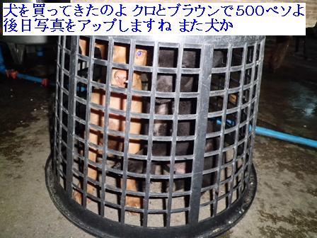 CIMG1303262.jpg