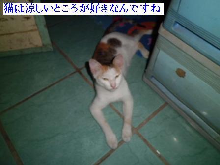 CIMG1304131.jpg