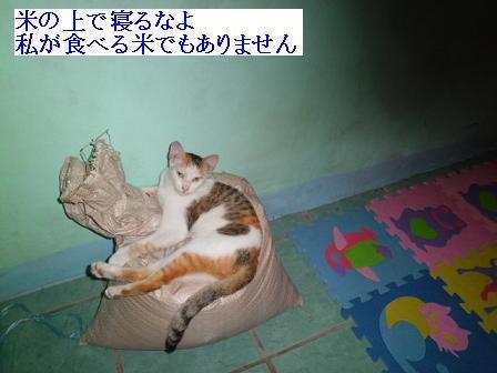 CIMG1305151.jpg