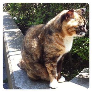 江ノ島猫写真