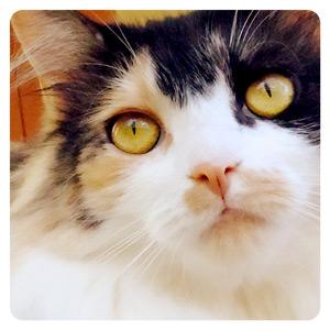 猫カフェの猫ちゃんその5