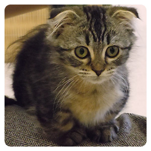 猫カフェの猫ちゃんその8