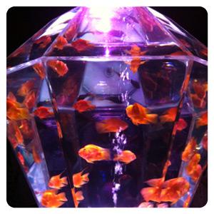 アートアクアリウム展2012・金魚多面体水槽