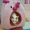 豚さんベッドからコンニチワ