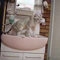 洗面台からコンニチハ