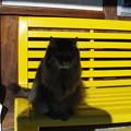 ホームのベンチで