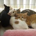 多頭飼い崩壊から救われた仔猫達