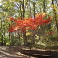 山中に生える紅葉