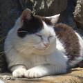 ねむり猫IN田代島