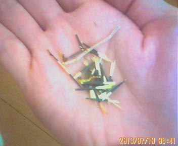 マリーゴールドの細長い種