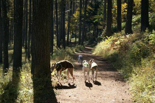 ピクニックと林檎狩り9