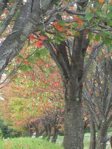 皆が大好きな秋3