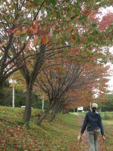 皆が大好きな秋4