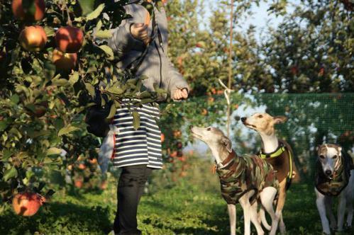 ピクニックと林檎狩り21