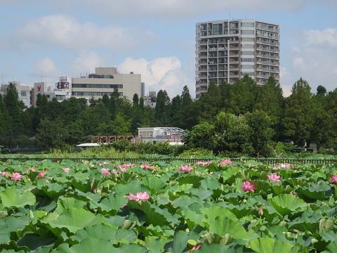 0804SINOHASU16.jpg