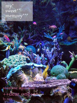 サンシャイン水族館121108_4