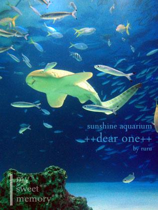 サンシャイン水族館121108_1