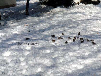 初雪130115_6