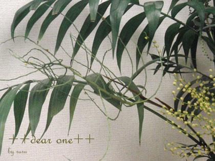 テーブルヤシの花130513_14