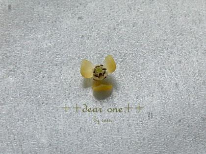テーブルヤシの花130513_16