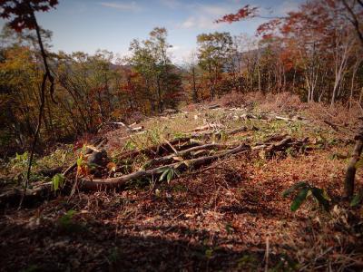 39.測量で伐採された場所