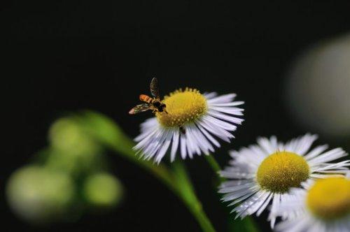 庭の生き物たち4