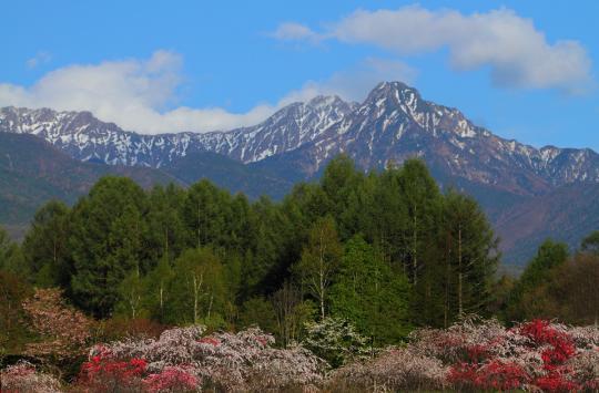 2012.05.11-八ヶ岳-4
