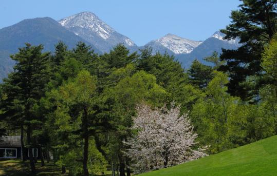 2012.05.19-桜-4